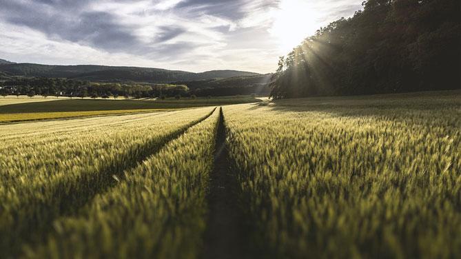 Cibo di qualità: la Fao scommette sulle biotecnologie agricole
