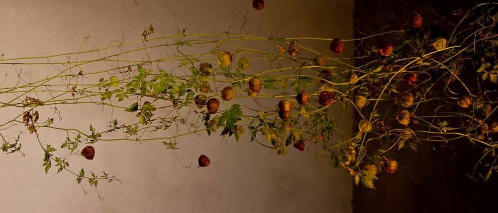 naked_plants