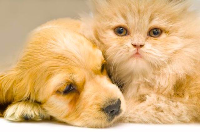 La Tigna dei cani e dei gatti
