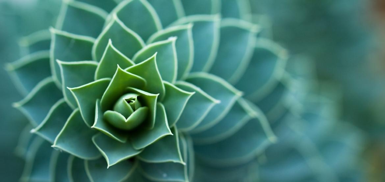 aboca_piante1
