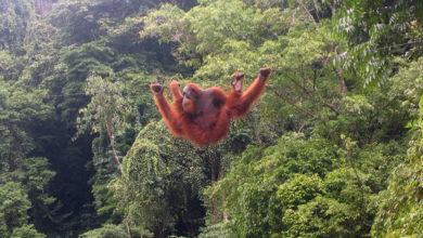 Alt Tag: Olio di palma e ambiente – Olio di palma sostenibile