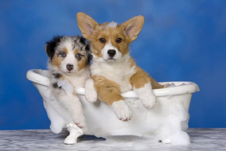 Vasca Da Toelettatura Cani : Come fare la toeletta al cane a casa e con quale frequenza