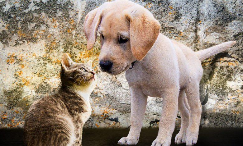Spagna verso la legge che riconosce gli animali come esseri senzienti