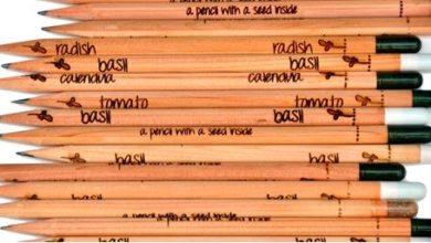 È nata Sprout, la prima matita che germoglia