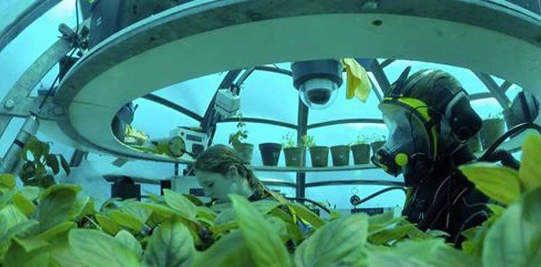 L'agricoltura del futuro sta in un orto sottomarino