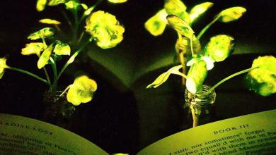 Luce vegetale: il MIT incorpora nanoparticelle nelle foglie delle piante