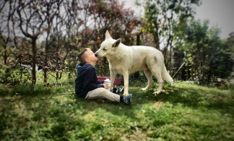 Italiani amici degli animali: cane o gatto in una casa su tre
