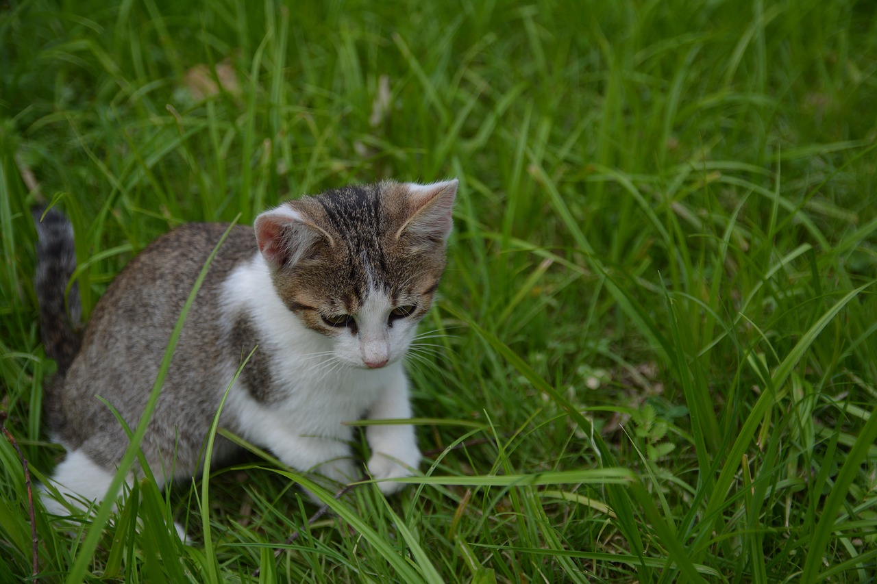 Anche i gatti sono mancini. Lo rivela l'Università di Belfast