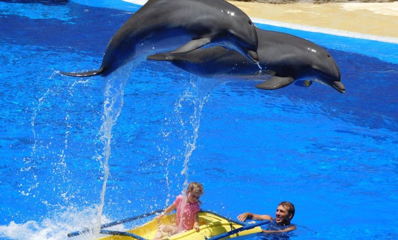 Via libera al bagno con i delfini: la protesta degli animalisti