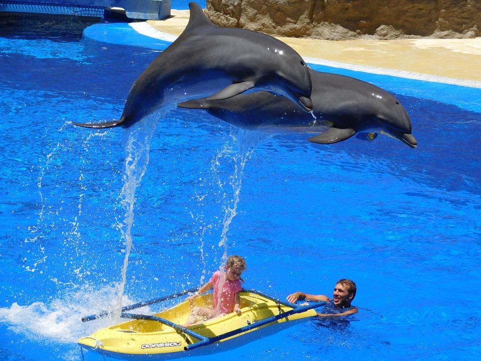 Via libera al bagno con i delfini la protesta degli animalisti