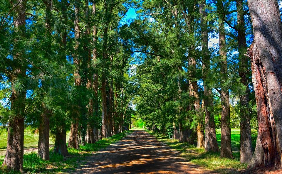 Nuova Foresta del Nord: in Gran Bretagna 50 milioni di nuove piante
