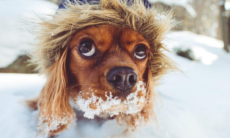I cani soffrono il freddo? Veterinario dorme in una cuccia per scoprirlo