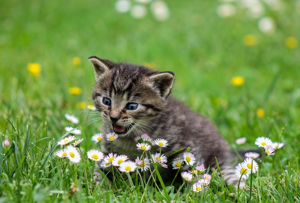 Le fusa dei gatti aiutano a combattere lo stress e ci aiutano a guarire