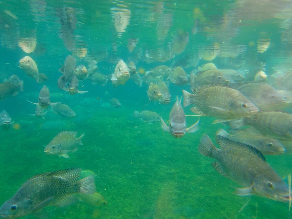Progetto per monitorare il benessere dei pesci di allevamento