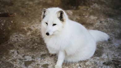 Animali da pelliccia, vietato allevarli