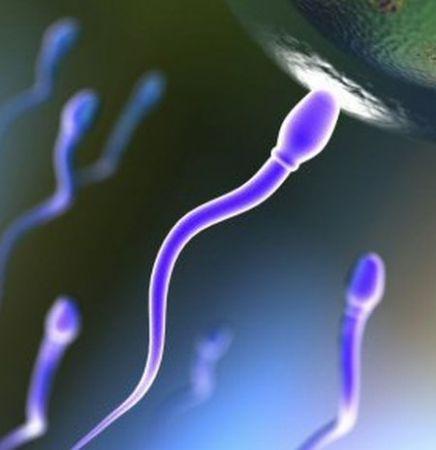 Fertilità maschile: l'inquinamento minaccia gli spermatozoi