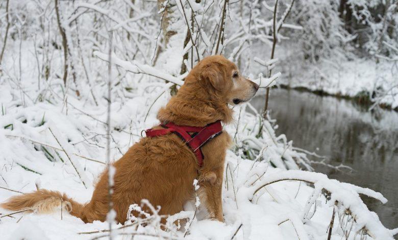 Animali domestici: le regole per proteggere cani e gatti dal freddo