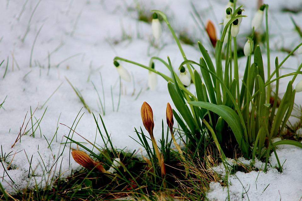 Piante e gelo: come rimediare ai danni del freddo eccessivo