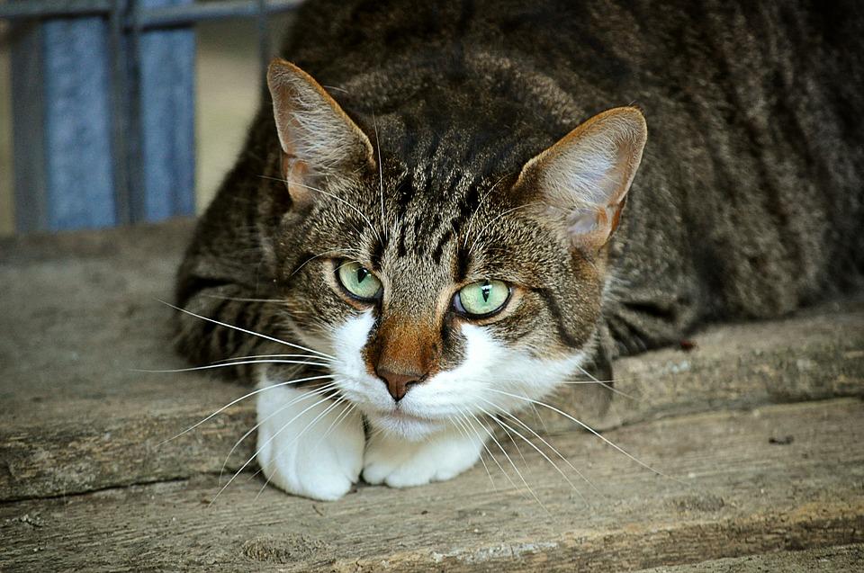 Giornata Nazionale del Gatto: 5 curiosità sul mondo felino