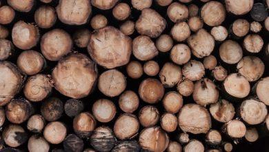 """Il """"super legno"""": creato un nuovo materiale più resistente dell'acciaio"""