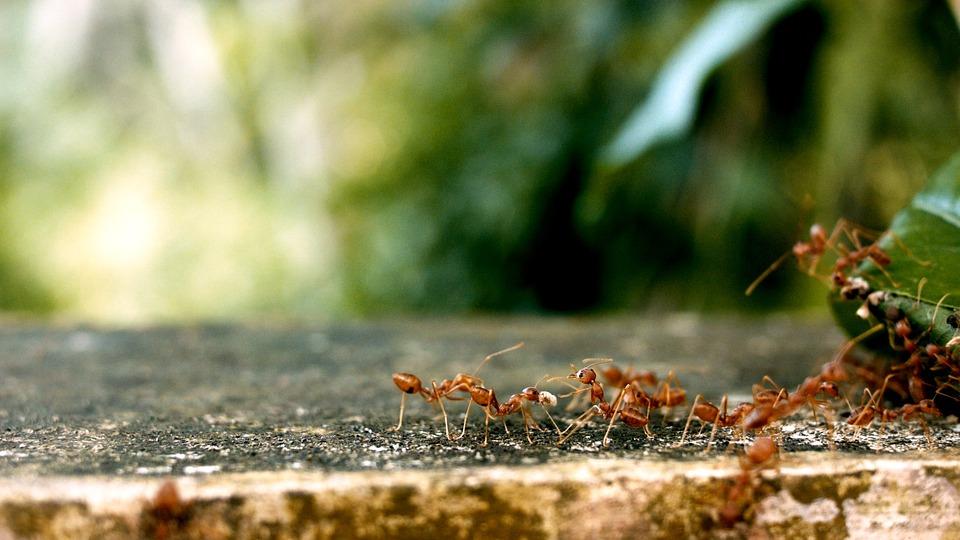 Formiche In Casa Quali Sono I Rimedi Naturali Per Tenerle Lontane