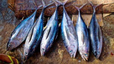 Allarme alimentare in Piemonte: intossicazione da tonno per presenza di istamina