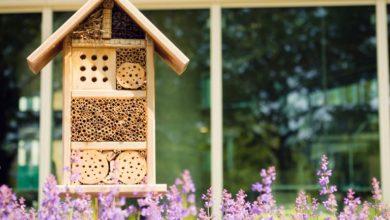 In arrivo il primo Bee Hotel di Roma, un albergo che ospita le api