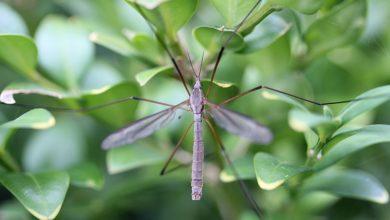 Come allontanare le zanzare? Lo svela una ricerca
