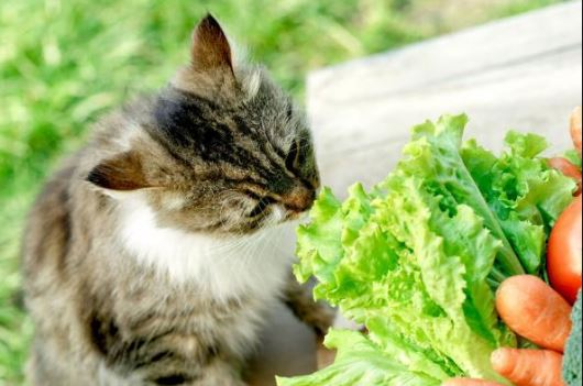 I cibi per i cani e i gatti: quali alimenti è giusto che consumino in estate?