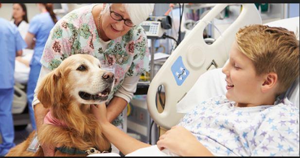 Cani in ospedale: Serena, il bassotto che accompagna i bambini in sala operatoria