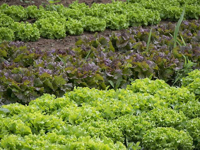 coltivazioni indoor