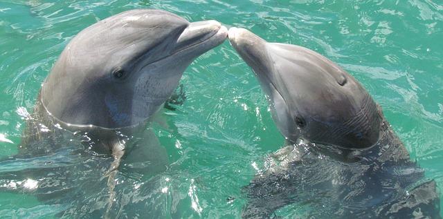I delfini come gli esseri umani, comunicano tra loro chiamandosi per nome