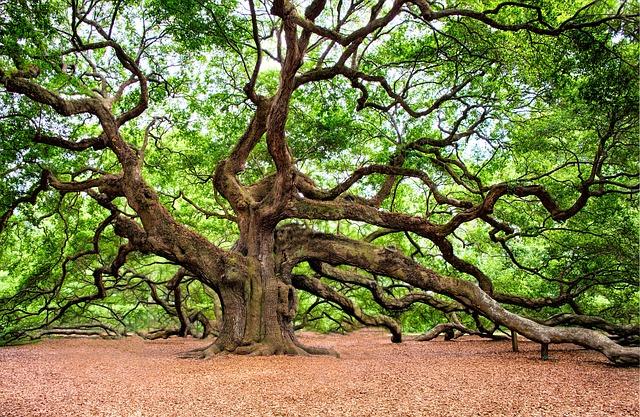 Gli alberi secolari: dal nord al sud il tesoro green d'Italia