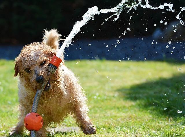 Cani e caldo: i 5 errori che quasi tutti i proprietari commettono d'estate