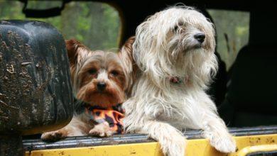 Le campagne di Italo e Trenitalia per viaggiare con i cani quest'estate