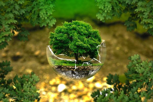 Superficie di alberi in crescita a livello mondiale: i dati di una nuova ricerca