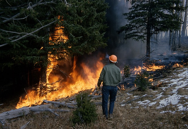 FireAware: arriva l'app gratuita per combattere gli incendi nei boschi