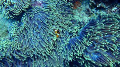 Scoperta al largo delle coste americane una nuova barriera corallina