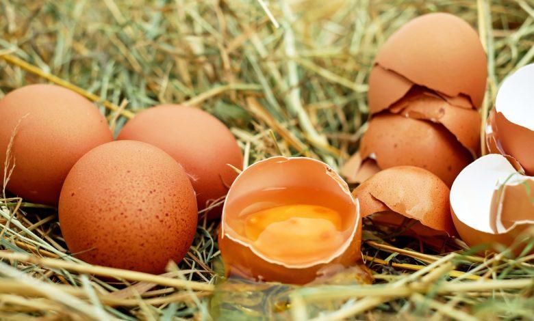 Salmonella nelle uova: i lotti ritirati dal Ministero della Salute