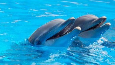 In Canada è vietato tenere in cattività delfini e balene nei parchi acquatici