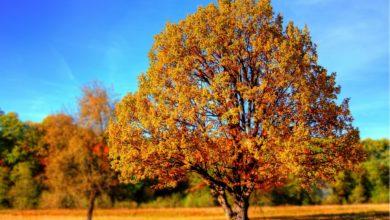 Autunno: tra frutta e verdura, i migliori cibi della stagione
