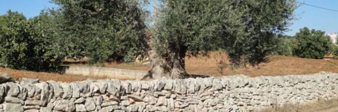 I muretti a secco dichiarati patrimonio dell'umanità dall'Unesco