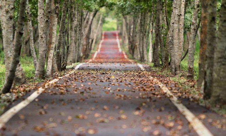 A Parma una famiglia ha piantato undicimila alberi contro il cemento