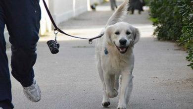 cani a passeggio- australia