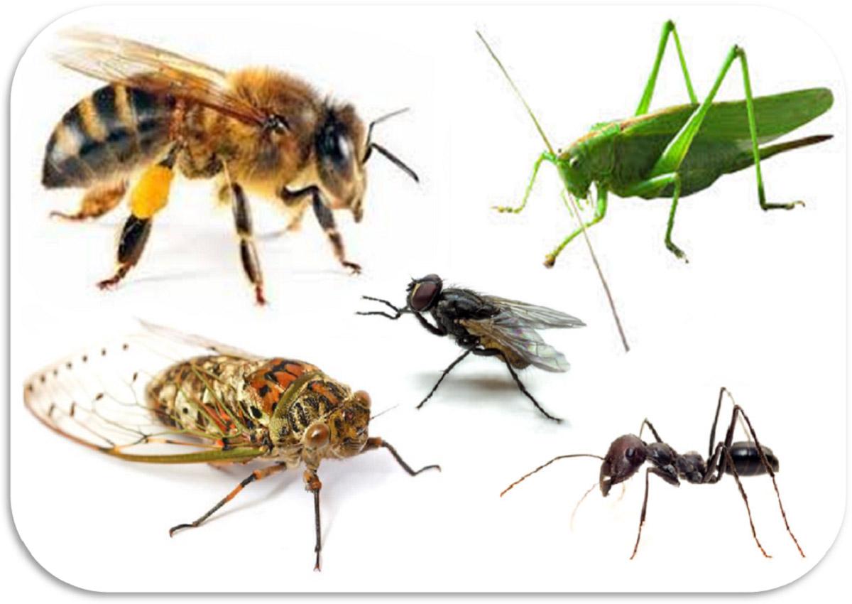 Repellente Naturale Per Vespe rimedi naturali contro gli insetti facili e veloci senza aditivi