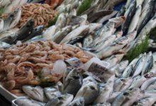 Consumo Pesce