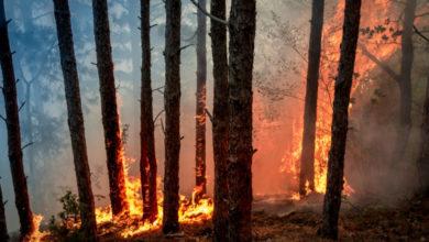 Incendi Foreste