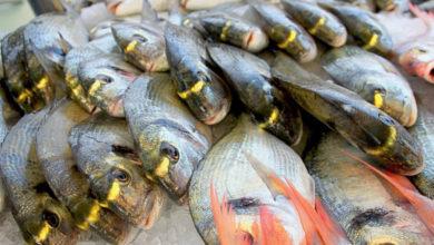 Pesce Laboratorio