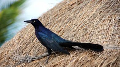 Uccelli Occhi Palpebre