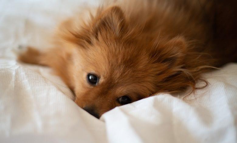 Cani Materasso
